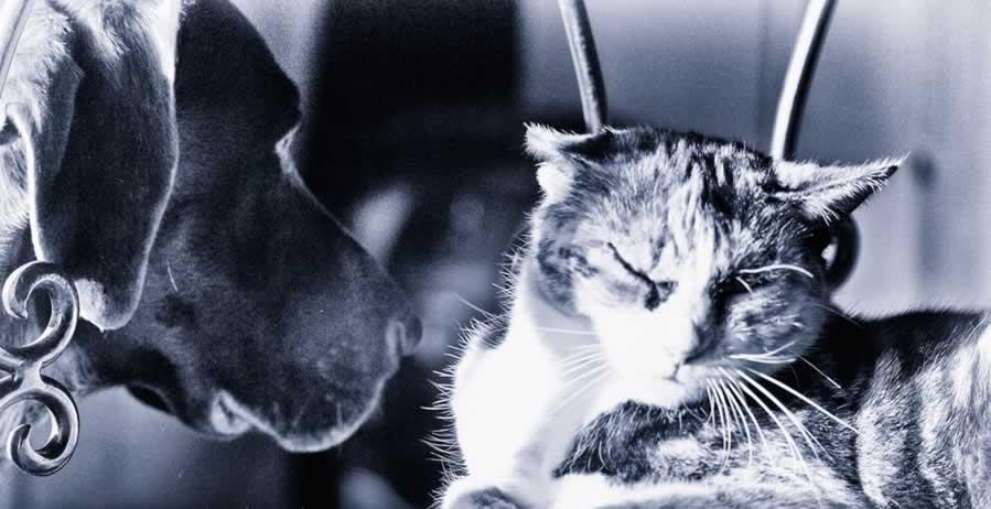 chiens chats portail forum articles petites annonces. Black Bedroom Furniture Sets. Home Design Ideas